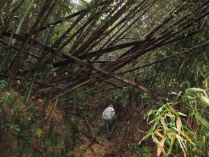 Following Satoshi Through The Forest