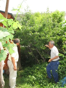 Ted and Shinichi checking out the fruit trees